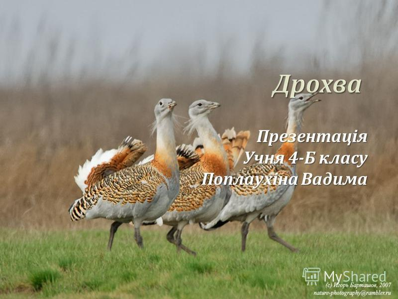 Презентація Учня 4- Б класу Поплаухіна Вадима