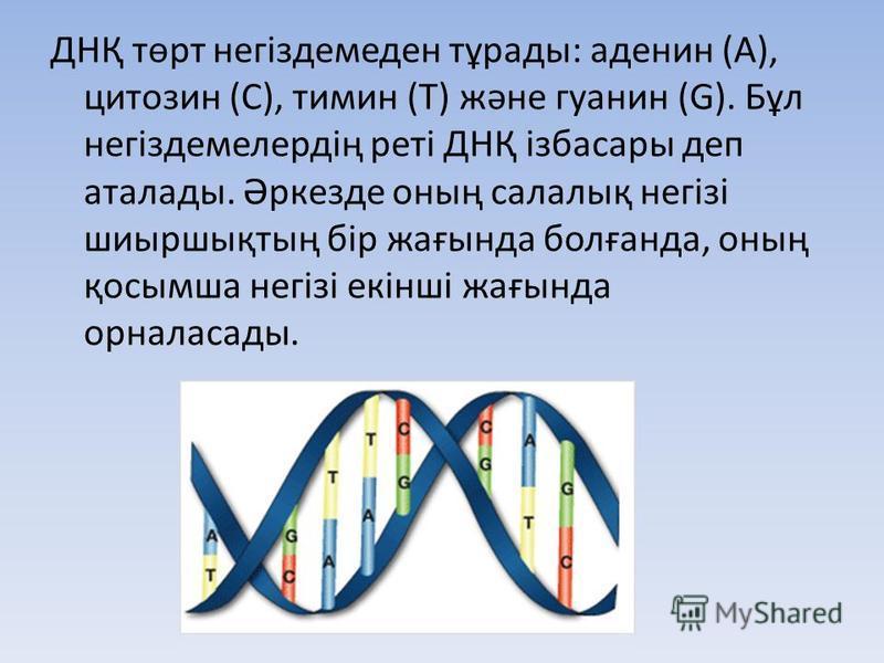 ДНҚ төрт негіздемеден тұрады: аденин (А), цитозин (C), тимин (T) және гуанин (G). Бұл негіздемелердің реті ДНҚ ізбасары деп аталады. Әркезде оның салалық негізі шиыршықтың бір жағында болғанда, оның қосымша негізі екінші жағында орналасады.