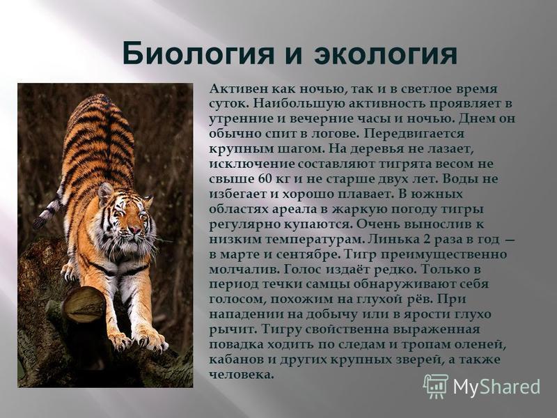 Биология и экология Активен как ночью, так и в светлое время суток. Наибольшую активность проявляет в утренние и вечерние часы и ночью. Днем он обычно спит в логове. Передвигается крупным шагом. На деревья не лазает, исключение составляют тигрята вес