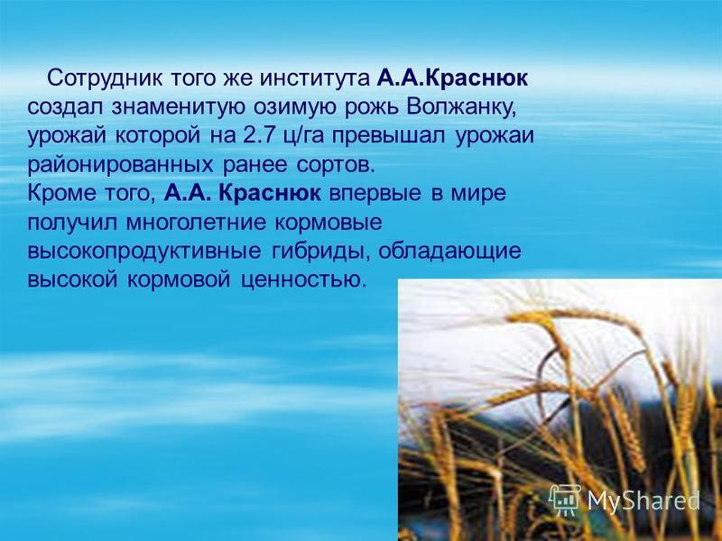 Сотрудник того же института А.А.Краснюк создал знаменитую озимую рожь Волжанку, урожай которой на 2.7 ц/га превышал урожаи районированных ранее сортов. Кроме того, А.А. Краснюк впервые в мире получил многолетние кормовые высокопродуктивные гибриды, о