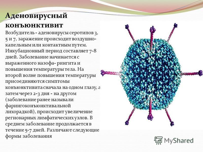 Аденовирусный конъюнктивит Возбудитель - аденовирусы серотипов 3, 5 и 7, заражение происходит воздушно- капельным или контактным путем. Инкубационный период составляет 7-8 дней. Заболевание начинается с выраженного назофарингита и повышения температу