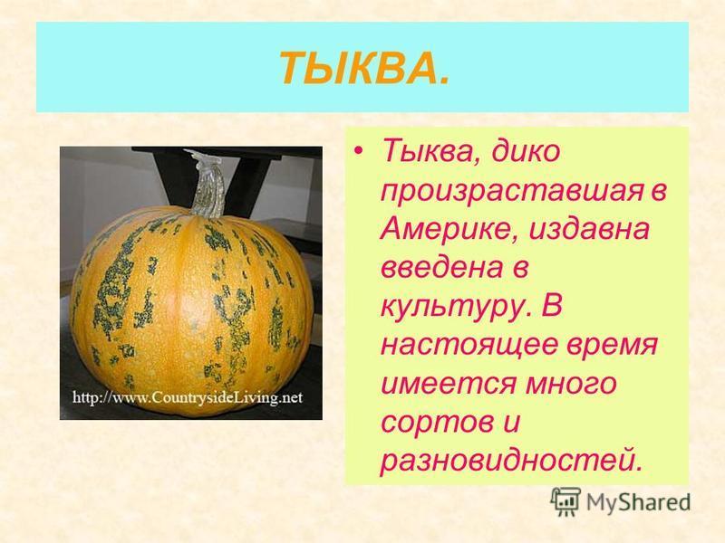 ТЫКВА. Тыква, дико произраставшая в Америке, издавна введена в культуру. В настоящее время имеется много сортов и разновидностей.