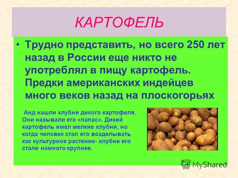 КАРТОФЕЛЬ Трудно представить, но всего 250 лет назад в России еще никто не употреблял в пищу картофель. Предки американских индейцев много веков назад на плоскогорьях Анд нашли клубни дикого картофеля. Они называли его «папа с». Дикий картофель имел