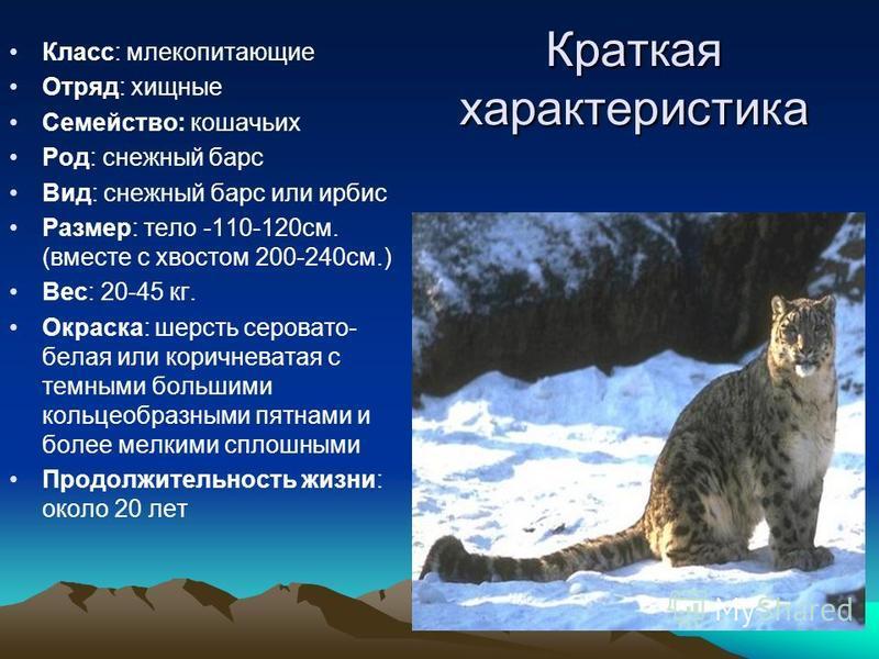 Краткая характеристика Класс: млекопитающие Отряд: хищные Семейство: кошачьих Род: снежный барс Вид: снежный барс или ирбис Размер: тело -110-120 см. (вместе с хвостом 200-240 см.) Вес: 20-45 кг. Окраска: шерсть серовато- белая или коричневатая с тем