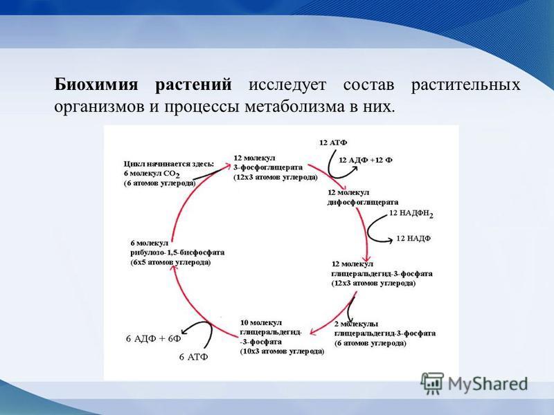 Биохимия растений исследует состав растительных организмов и процессы метаболизма в них.