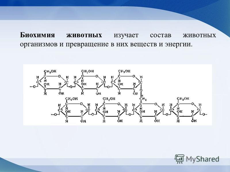 Биохимия животных изучает состав животных организмов и превращение в них веществ и энергии.