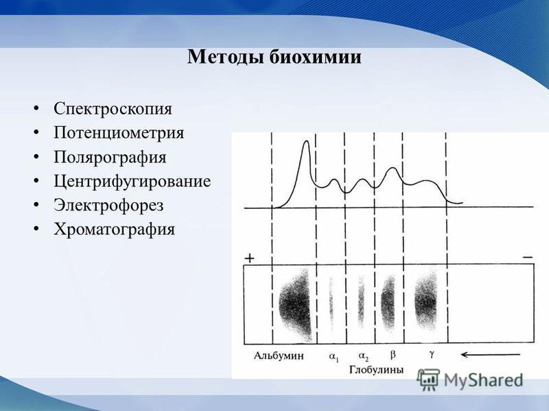 Методы биохимии Спектроскопия Потенциометрия Полярография Центрифугирование Электрофорез Хроматография