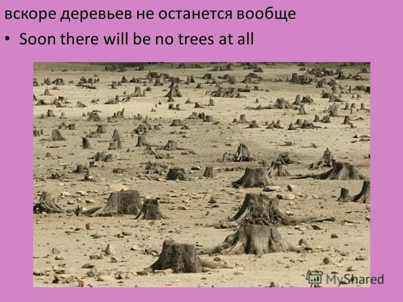 вскоре деревьев не останется вообще Soon there will be no trees at all