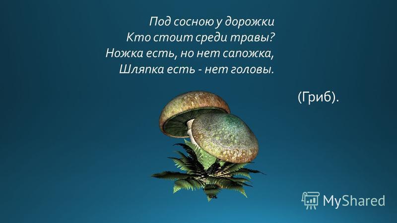 Под сосною у дорожки Кто стоит среди травы? Ножка есть, но нет сапожка, Шляпка есть - нет головы. (Гриб).