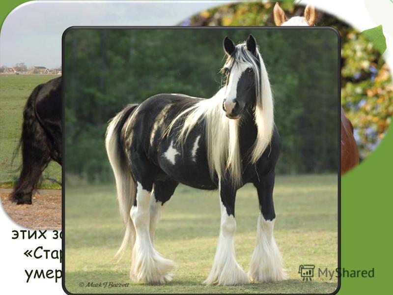 Лошади Однозначно сказать, сколько лет живут лошади, невозможно. Тем не менее, лошадь, за которой хозяева хорошо ухаживают, и которая живет в нормальных условиях, способна прожить 25-30 лет. Самыми старыми представителями этих замечательных животных