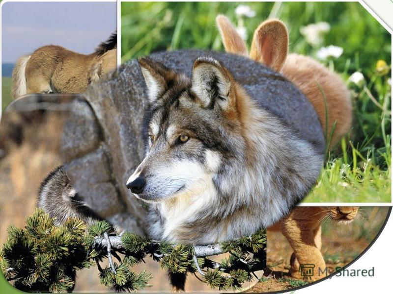 Секрет долголетия животного зависит от того, в каких условиях он живет. Поэтому очень важно знать, какие условия хороши для вашего питомца. Берегите и любите животных!