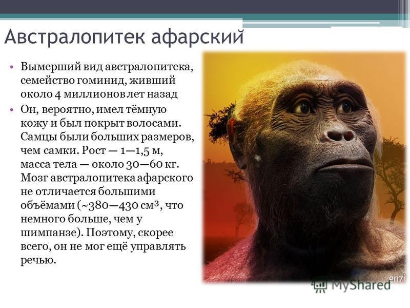 Австралопитек афарскии ̆ Вымерший вид австралопитека, семейство гоминид, живший около 4 миллионов лет назад Он, вероятно, имел тёмную кожу и был покрыт волосами. Самцы были больших размеров, чем самки. Рост 11,5 м, масса тела около 3060 кг. Мозг авст