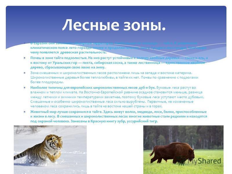 В Евразии они занимают обширные территории. Наибольшая по площади тайга. В умеренном климатическом поясе лето гораздо теплее и продолжительнее, чем в тундре и лесотундре, благодаря чему появляется древесная растительность. Почвы в зоне тайги подзолис