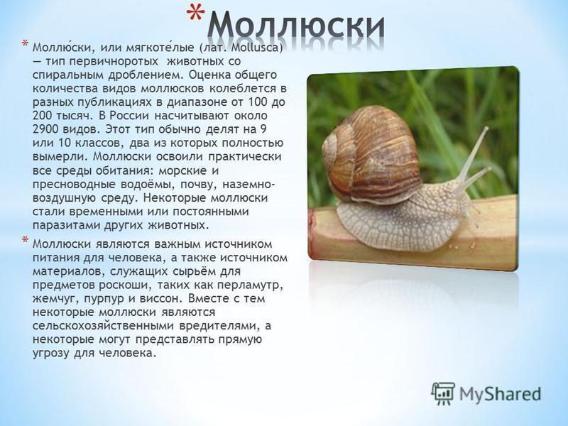 * Моллюски, или мягкотелые (лат. Mollusca) тип первичноротых животных со спиральным дроблением. Оценка общего количества видов моллюсков колеблется в разных публикациях в диапазоне от 100 до 200 тысяч. В России насчитывают около 2900 видов. Этот тип