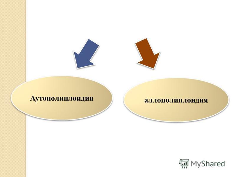 Полиплоидты клетка Аутополиплоидия аллополиплоидия