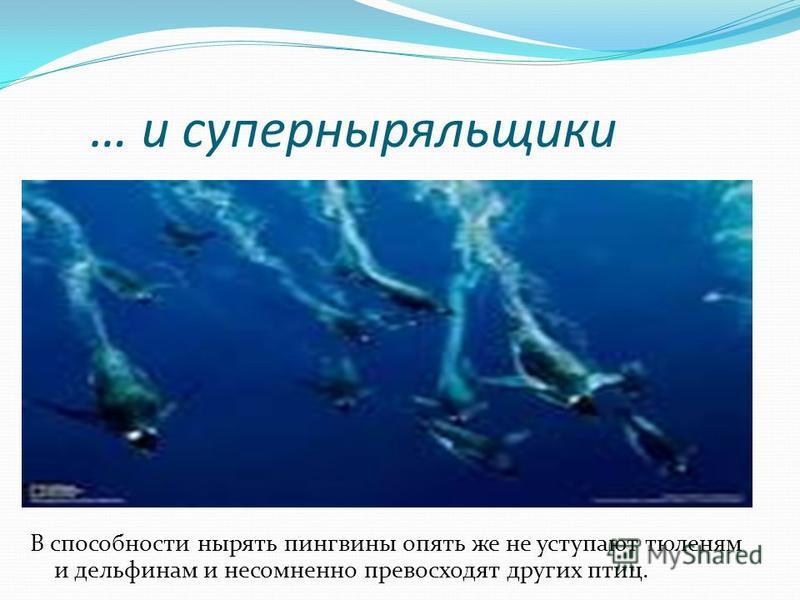 Пингвины – супер пловцы Пингвины лучше всех остальных птиц приспособились к жизни в воде. Они достигли в этом уровня тюленей и дельфинов. Пингвины не просто плавают под водой, они под водой летают, очень быстро и ловко. Главным движителем при плавани
