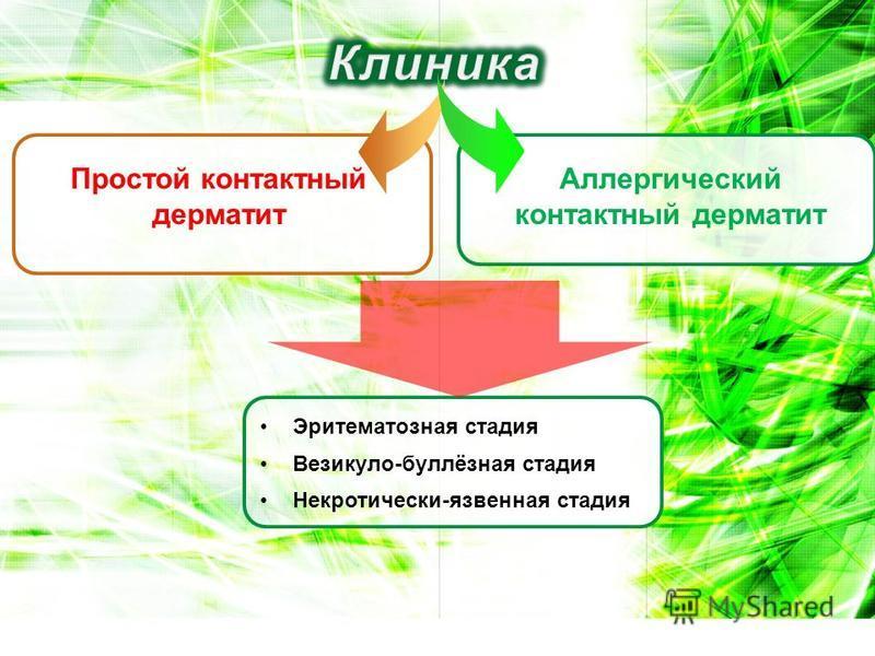 Простой контактный дерматит Аллергический контактный дерматит Эритематозная стадия Везикуло-буллёзная стадия Некротически-язвенная стадия