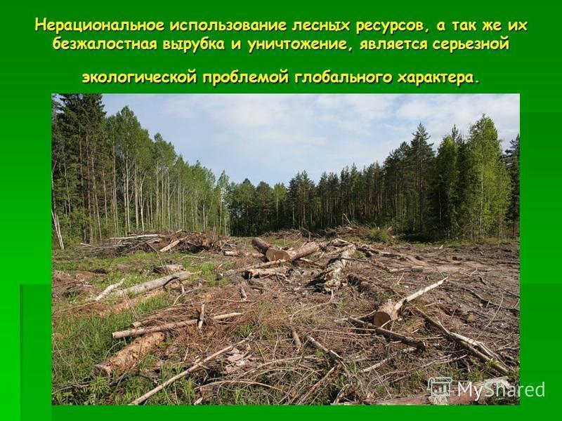 Нерациональное использование лесных ресурсов, а так же их безжалостная вырубка и уничтожение, является серьезной экологической проблемой глобального характера.