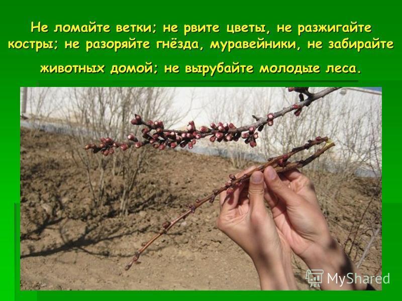 Не ломайте ветки; не рвите цветы, не разжигайте костры; не разоряйте гнёзда, муравейники, не забирайте животных домой; не вырубайте молодые леса.
