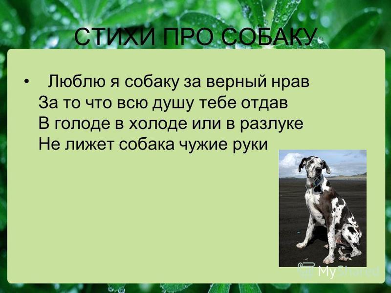 СТИХИ ПРО СОБАКУ Люблю я собаку за верный нрав За то что всю душу тебе отдав В голоде в холоде или в разлуке Не лижет собака чужие руки