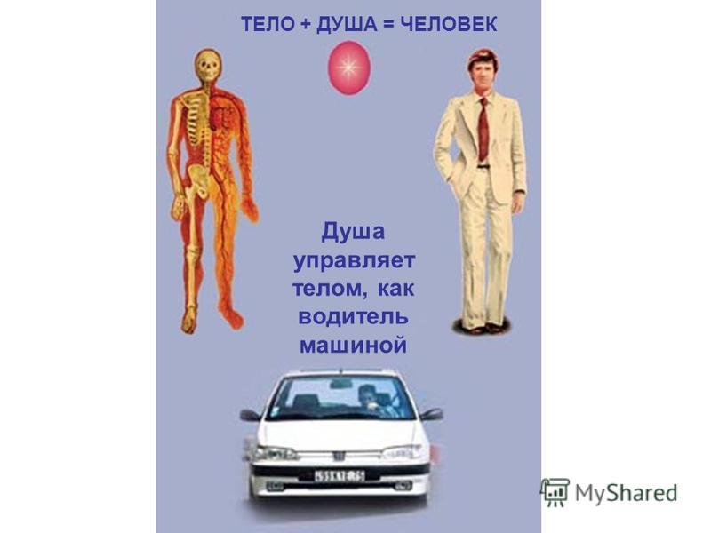 ТЕЛО + ДУША = ЧЕЛОВЕК Душа управляет телом, как водитель машиной