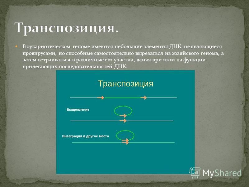 Некоторые бактериальные вирусы (бактериофаги) способны рекомбинировать с ДНК хозяина таким образом, что ДНК бактериофага встраивается в линейной форме в бактериальный геном.