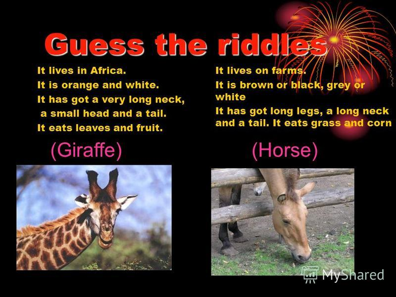 Guess the riddles It lives in Africa. It is orange and white. It has got a very long neck, a small head and a tail. It eats leaves and fruit. It lives on farms. It is brown or black, grey or white It has got long legs, a long neck and a tail. It eats