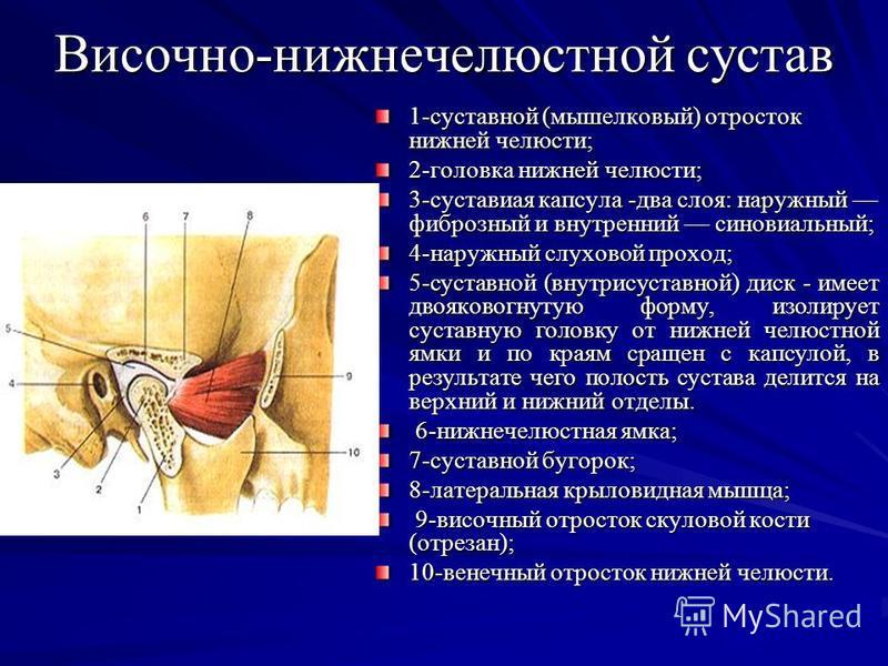 Височно-нижнечелюстной сустав 1-суставной (мыщелковый) отросток нижней челюсти; 2-головка нижней челюсти; 3-суставиая капсула -два слоя: наружный фиброзный и внутренний синовиальный; 4-наружный слуховой проход; 5-суставной (внутрисуставной) диск - им