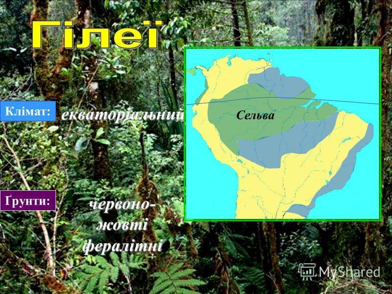 Гілеї (амазонська сельва) Гілеї (амазонська сельва) Савани (кампос) Савани (кампос) Пампа Пампа Мангрові ліси Мангрові ліси Рідколісся (каатинга) Рідколісся (каатинга) Напівлистопадний ліс (мата) Напівлистопадний ліс (мата)