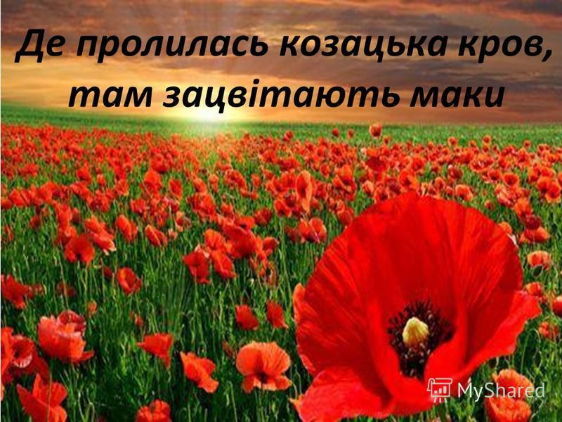 Де пролилась козацька кров, там зацвітають маки