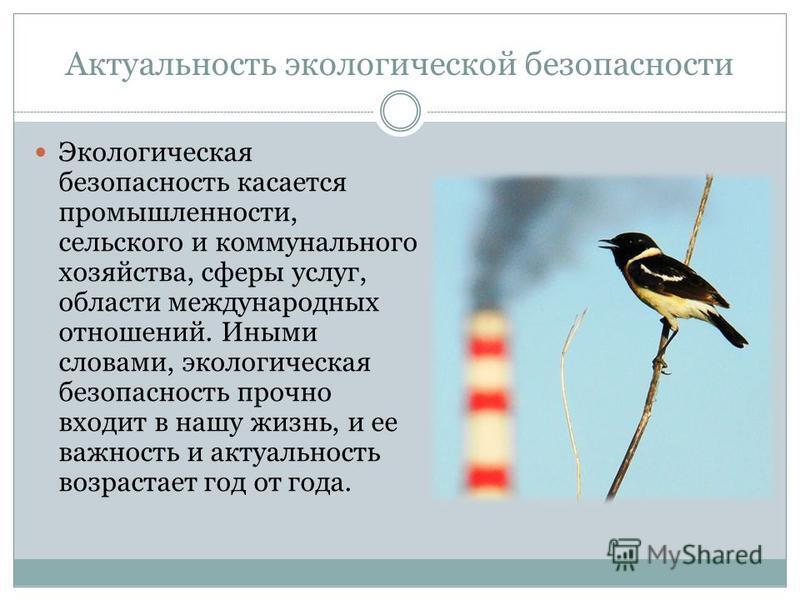 Актуальность экологической безопасности Экологическая безопасность касается промышленности, сельского и коммунального хозяйства, сферы услуг, области международных отношений. Иными словами, экологическая безопасность прочно входит в нашу жизнь, и ее
