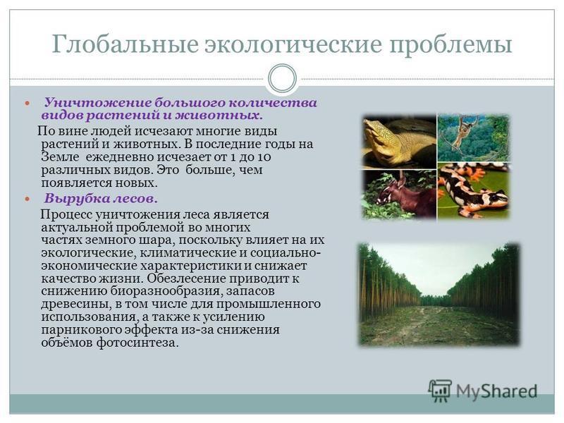 Глобальные экологические проблемы Уничтожение большого количества видов растений и животных. По вине людей исчезают многие виды растений и животных. В последние годы на Земле ежедневно исчезает от 1 до 10 различных видов. Это больше, чем появляется н