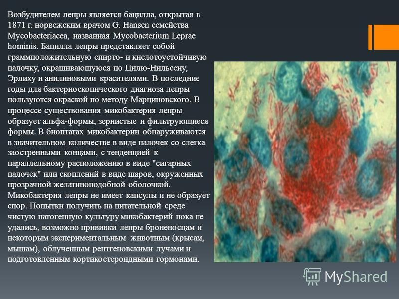 Возбудителем лепры является бацилла, открытая в 1871 г. норвежским врачом G. Hansen семейства Mycobacteriacea, названная Mycobacterium Leprae hominis. Бацилла лепры представляет собой грамположительную спирто- и кислотоустойчивую палочку, окрашивающу