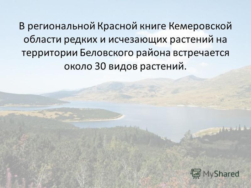 В региональной Красной книге Кемеровской области редких и исчезающих растений на территории Беловского района встречается около 30 видов растений.
