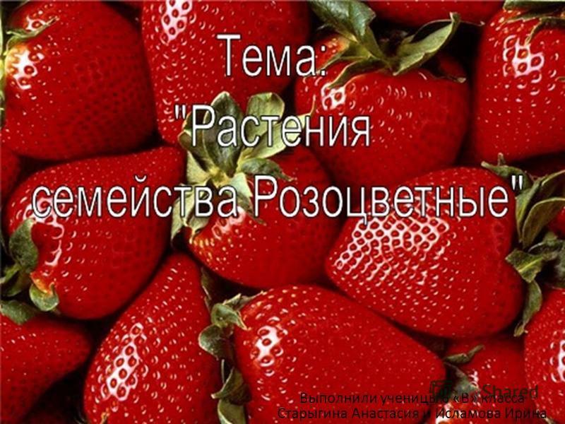 Выполнили ученицы 6 «В» класса Старыгина Анастасия и Исламова Ирина