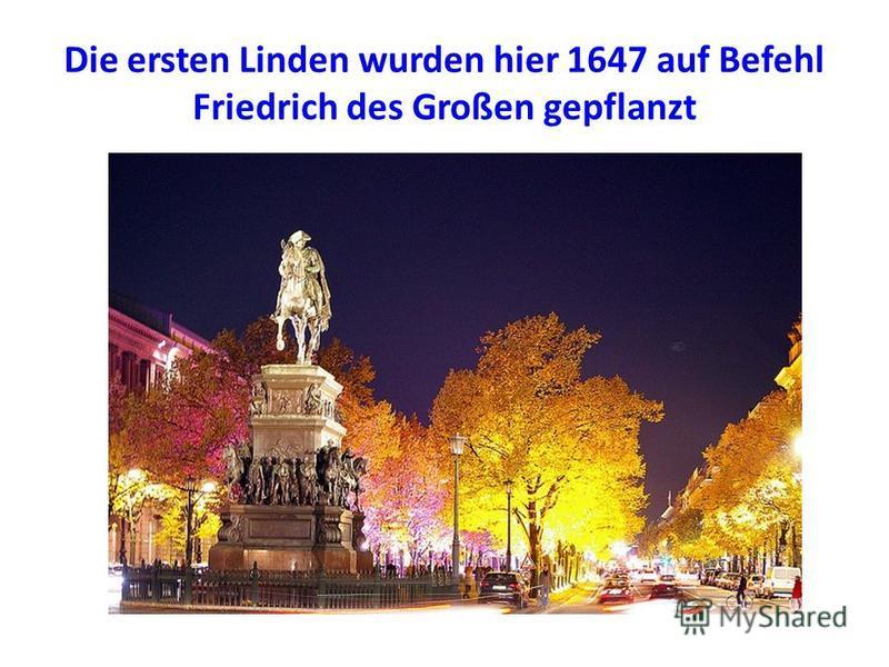 Die ersten Linden wurden hier 1647 auf Befehl Friedrich des Großen gepflanzt