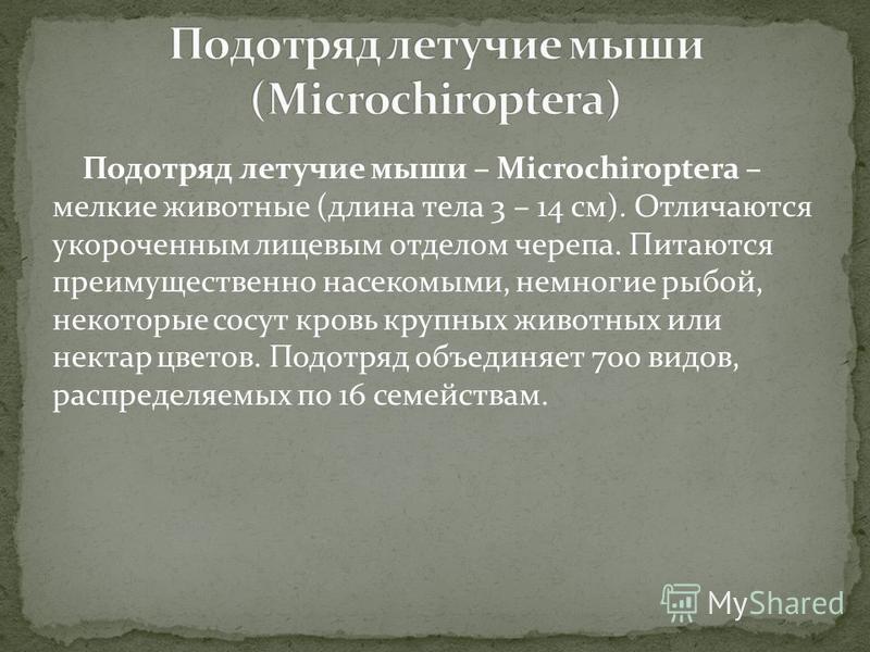 Подотряд летучие мыши – Microchiroptera – мелкие животные (длина тела 3 – 14 см). Отличаются укороченным лицевым отделом черепа. Питаются преимущественно насекомыми, немногие рыбой, некоторые сосут кровь крупных животных или нектар цветов. Подотряд о