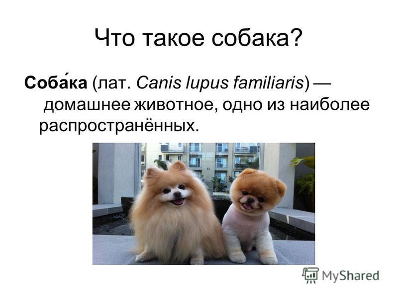 Что такое собака? Соба́ка (лат. Canis lupus familiaris) домашнее животное, одно из наиболее распространённых.