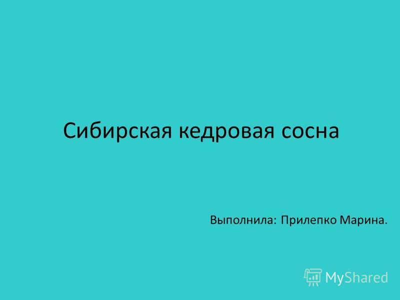 Сибирская кедровая сосна Выполнила: Прилепко Марина.