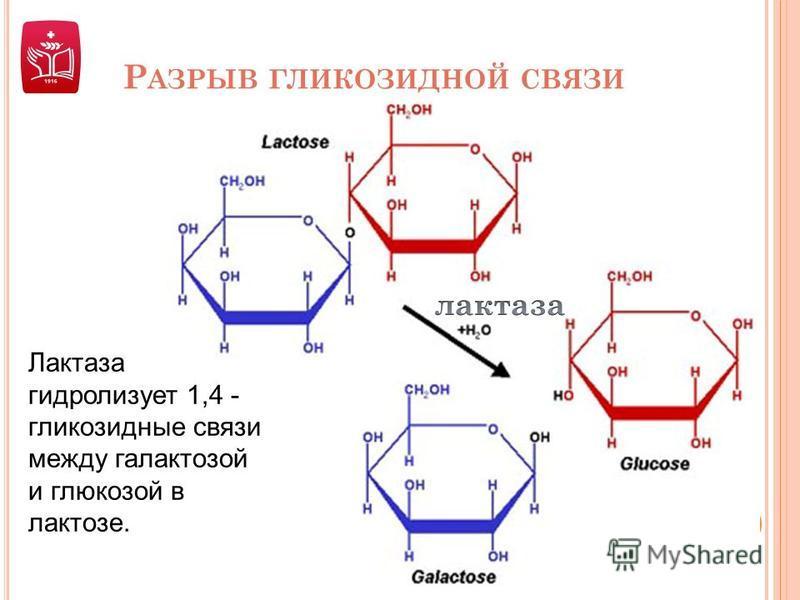 Р АЗРЫВ ГЛИКОЗИДНОЙ СВЯЗИ Лактаза гидролизует 1,4 - гликозидные связи между галактозой и глюкозой в лактозе.