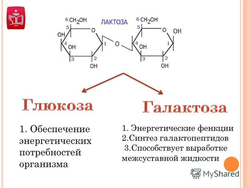 1. Обеспечение энергетических потребностей организма 1. Энергетические функции 2. Синтез галактопептидов 3. Способствует выработке межсуставной жидкости