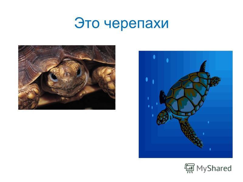 Это черепахи
