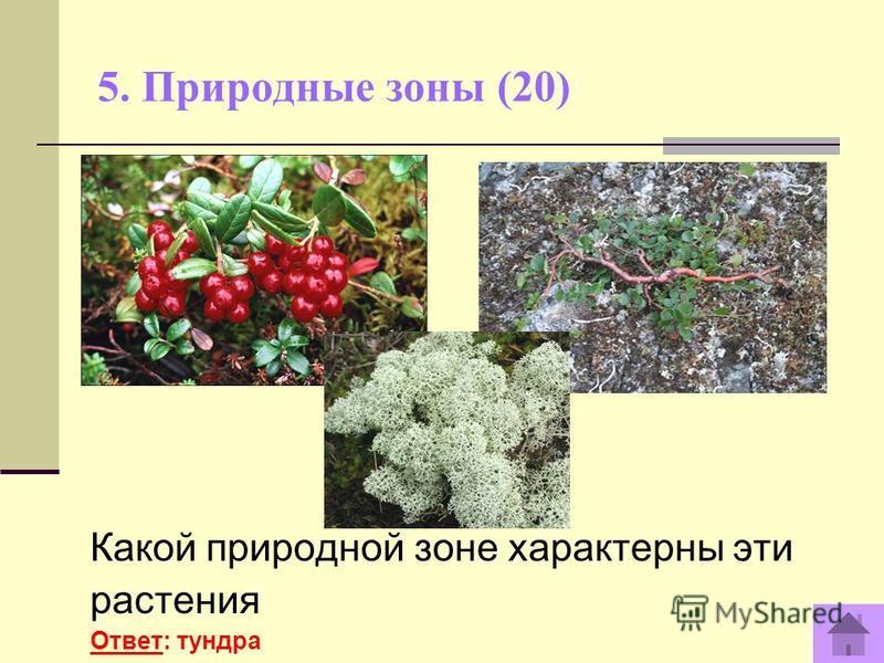 5. Природные зоны (20) Какой природной зоне характерны эти растения Ответ: тундра