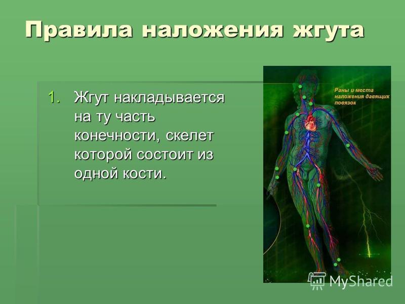 Правила наложения жгута 1. Жгут накладывается на ту часть конечности, скелет которой состоит из одной кости.