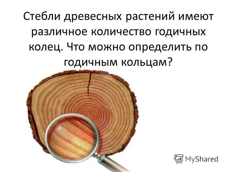 Стебли древесных растений имеют различное количество годичных колец. Что можно определить по годичным кольцам?