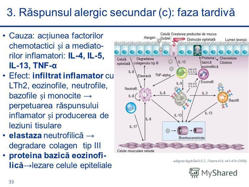 Cauza: aciunea factorilor chemotactici i a mediato- rilor inflamatori: IL-4, IL-5, IL-13, TNF-α Efect: infiltrat inflamator cu LTh2, eozinofile, neutrofile, bazofile i monocite perpetuarea răspunsului inflamator i producerea de leziuni tisulare elast