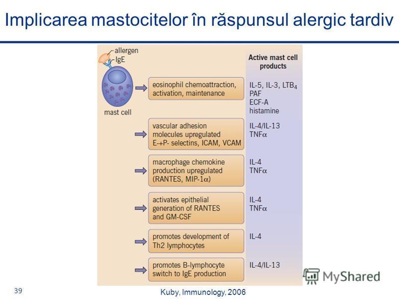 39 Implicarea mastocitelor în răspunsul alergic tardiv Kuby, Immunology, 2006