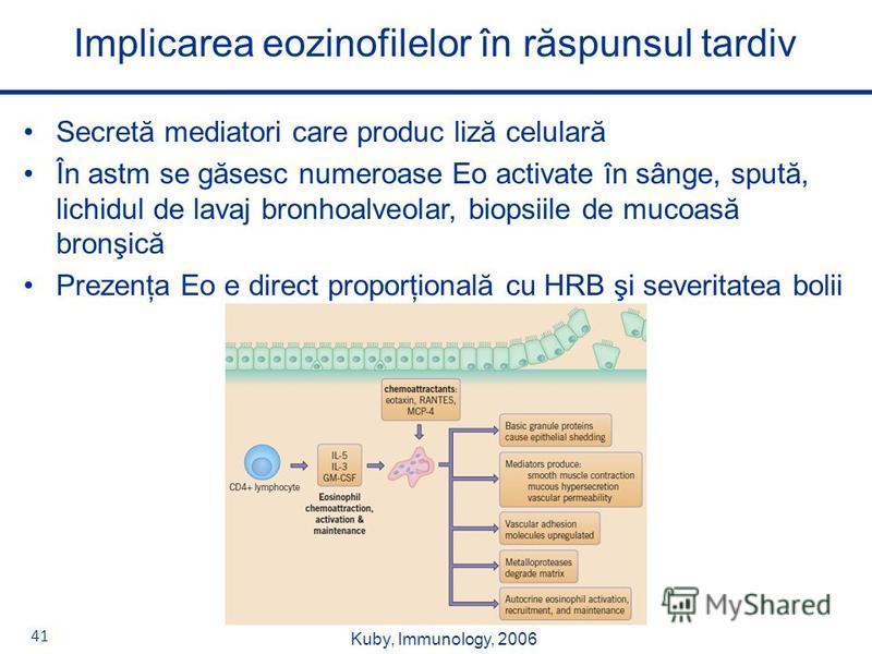 41 Secretă mediatori care produc liză celulară În astm se găsesc numeroase Eo activate în sânge, spută, lichidul de lavaj bronhoalveolar, biopsiile de mucoasă bronşică Prezenţa Eo e direct proporţională cu HRB şi severitatea bolii Implicarea eozinofi