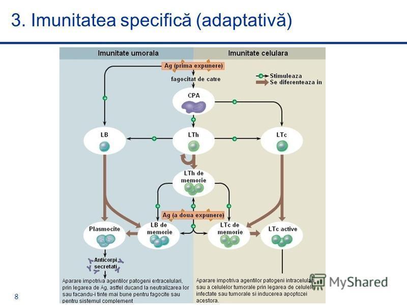 8 3. Imunitatea specifică (adaptativă)