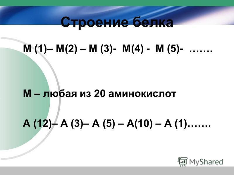 Строение белка М (1)– М(2) – М (3)- М(4) - М (5)- ……. М – любая из 20 аминокислот А (12)– А (3)– А (5) – А(10) – А (1)…….